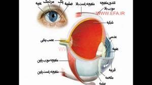 اندام های حسی بدن (چشم)