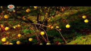 میوه درمانی _ به