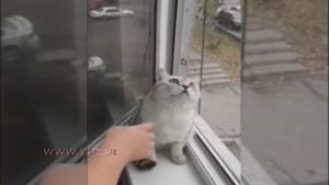 این گربه چرا خیره شده است؟