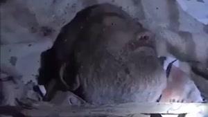 فیلم/تدوام حملات ددمنشانه جنگنده های سعودی به صنعا
