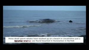 جسد نهنگ غول پیکر در ساحل نورفلک