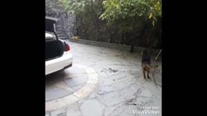 باهوش ترین سگ ایرانی (باورنکردنی)
