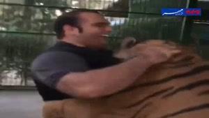 فیلم/ سرشاخ شدن بهداد سلیمی با ببر ایرانی
