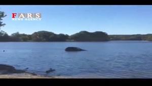 نجات راننده خودروی غرق شده در رودخانه