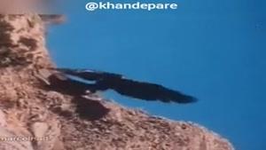 شکار بز کوهی بزرگ توسط عقاب واقعا شگفت انگیز