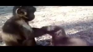تفاوت انسان و حیوان در این ویدیو به طرز شگفت انگیزی نشان داده شده است