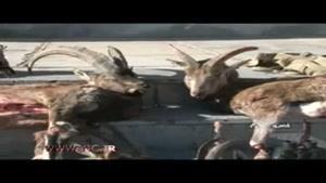 دستگیری سه شکارچی سابقه دار در شاهرود