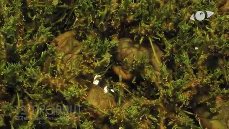 تایم لپس رشد سیب زمینی