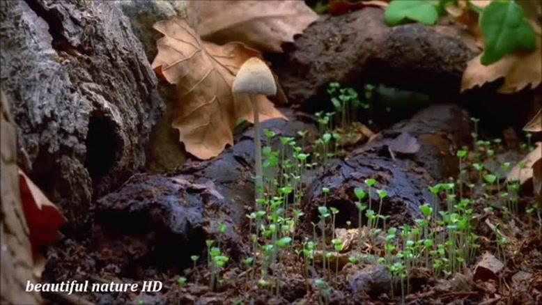 تایم لپس رشد قارچ ها