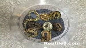 فروشگاه و نمایشگاه حیوانات خاص خانگی Reptile۸