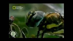 حشره پرنده سنجاقک