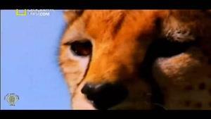 مستند گربه سانان بزرگ