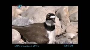 مستند پرندگان در سرزمین برف و آفتاب - قسمت ۴