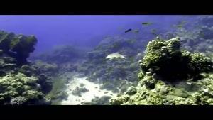 مستندی زیبا از جهان زیر آب قسمت ۱