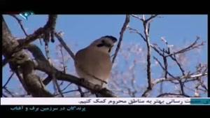 مستند پرندگان در سرزمین برف و آفتاب -قسمت ۱۱