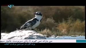 مستند پرندگان در سرزمین برف و آفتاب - قسمت ۸
