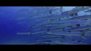 مستند زیبا از اعماق دریا قسمت ۲