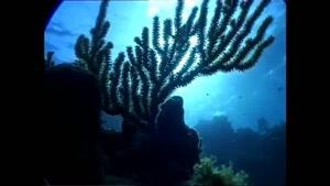 مستندی زیبا از دنیای زیر آب قسمت ۱