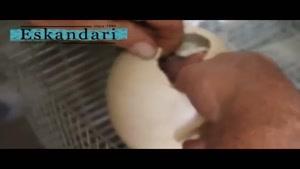 ویدیو فوق العاده به دنیا آمدن شترمرغ