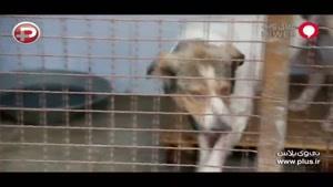 واکنش تند بهرام رادان به ویدیوی منتشر شده از یک سگ آزاری وحشیانه در گرگان