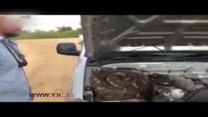 مخفی شدن مار پیتون در خودرو