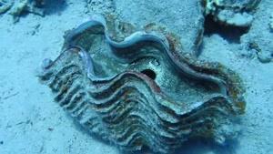 مستندی زیبا از ماهی های اعماق دریا