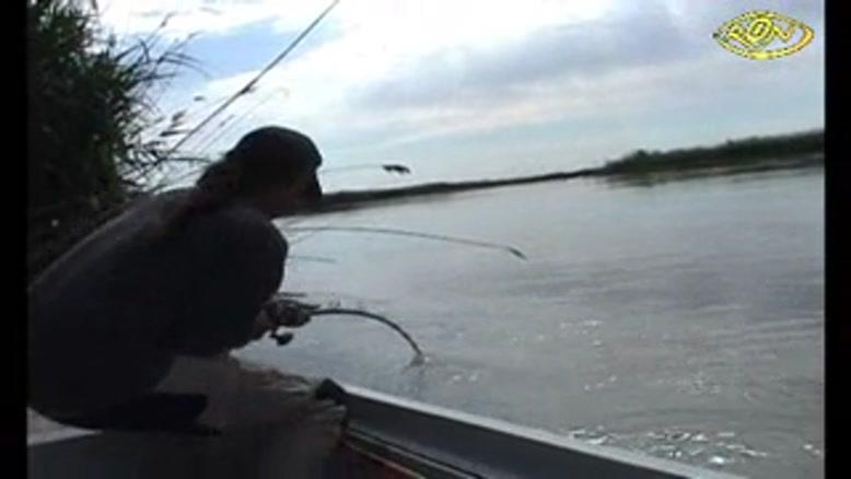 شکار ماهی ۱.۵ متری