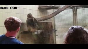 شوخی میمون مادر با فرزندش