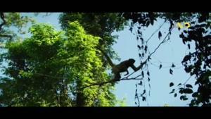 میمون های منحصربفرد!