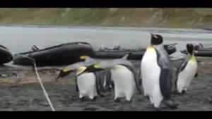 پنگون های دست پا چلفتی....!!!