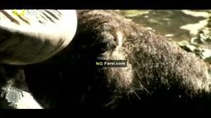 مستند اژدها های مرگبار کومودو قسمت اول