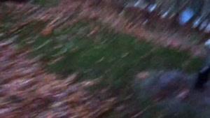 نحوه كاشت و نگهداشت درخت ميوه با صابر