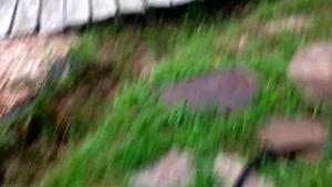 اموزش باغبانى با صابر ، مبارزه با قارچ درخت زردآلو