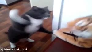 گربه و پلنگ عروسکی