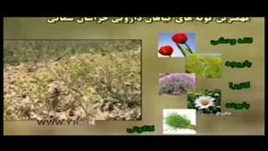 گیاهان دارویی از تولید تا فرآوری