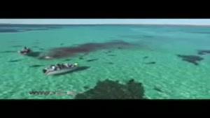 شکار بی رحمانهی نهنگ در سواحل استرالیا
