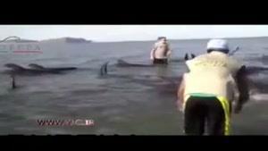 تلاش برای نجات نهنگ غول پیکر گرفتار شده
