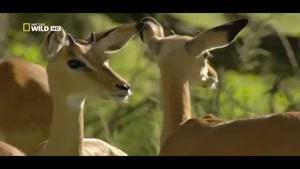 مستند جغرافیای ملی - سیاره حیوانات قسمت دوم