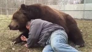 خرس مهربون