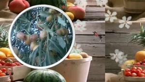 خواص میوه ها - سنجد