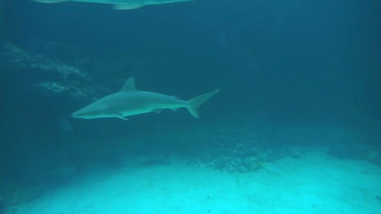 موجودات خزنده عمیق دریا