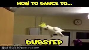 رقص پرندگان