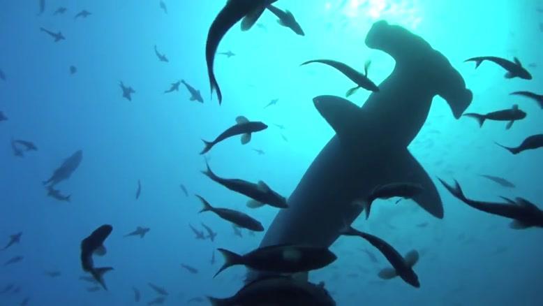 زیبایی ها و موجودات دنیای زیر آب