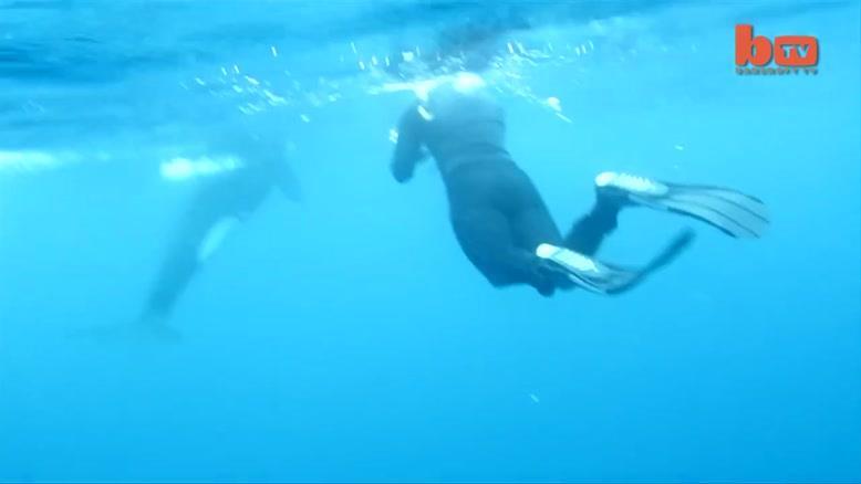 حمله نهنگ ها به کوسه سفید