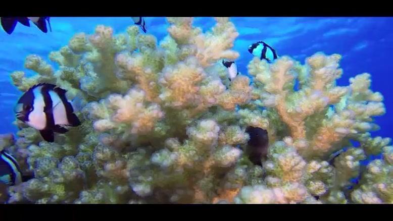 صخره های مرجانی آکواریوم