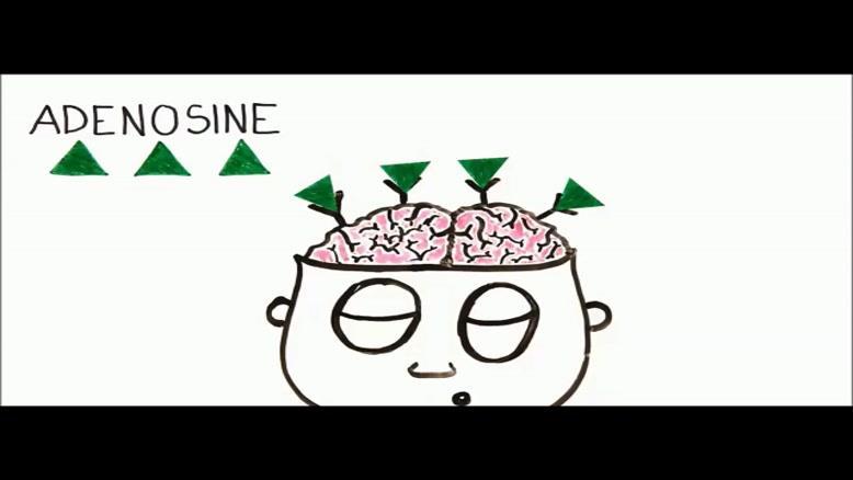 قهوه چه تاثیری بر مغز می گذارد؟