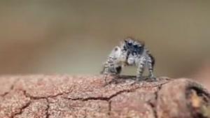 زیباترین عنکبوت های جهان