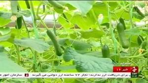 خيار گلخانه اي روستای سارمران