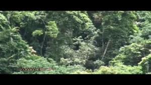 کشف گیبون های گونه سفید جنوبی در جنگل های ویتنام