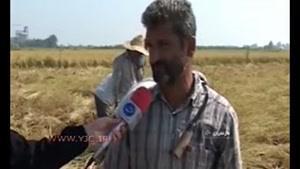 حمایت از برنجکاران مازندرانی از نوع ممنوعیت!